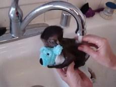Милая маленькая обезьянка купается)))